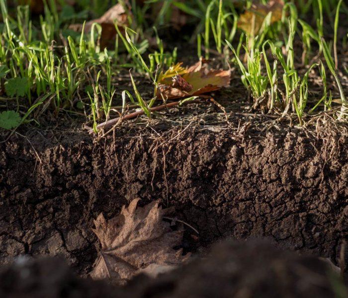 La biodiversità microbica quale valore per l'ambiente e per l'impresa.